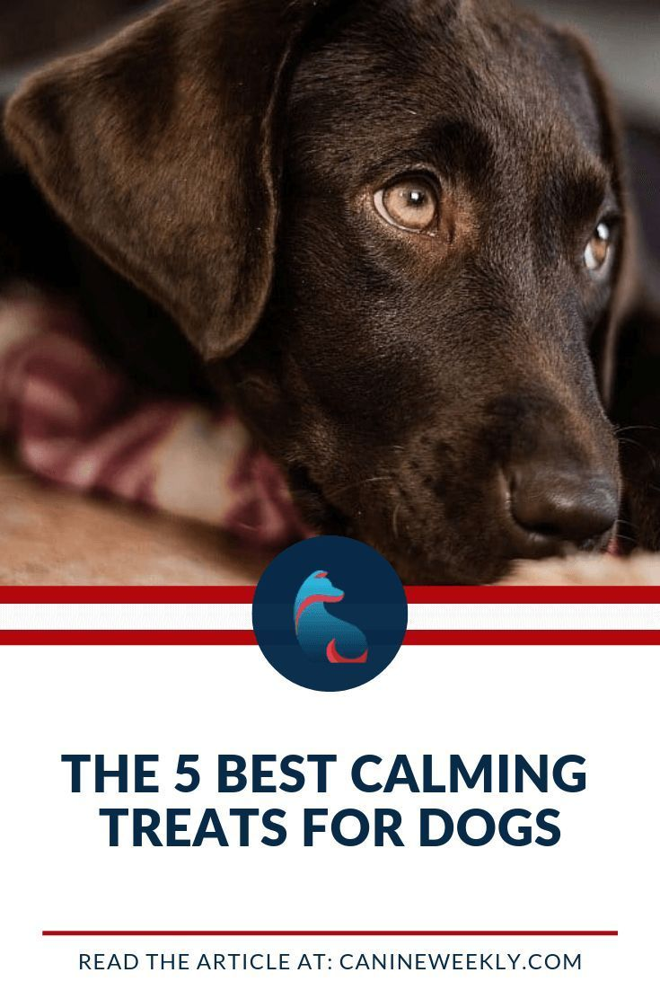 10 Best Calming Treats For Dogs In 2020 Top Bites And Chews