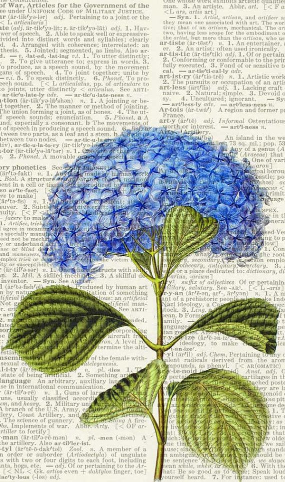 hydrangea flower print, vintage artwork printed on vintage dictionary page, vintage dictionary art print, wall art prints, upcycled book