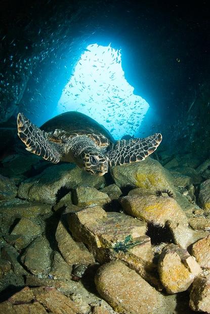 Fish Rock Cave, South West Rocks, NSW Australia (Photo Credit:Tony Brown)