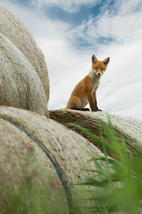 233 Best Images About Of Fox And Foe In The Land Of Snow On Pinterest Iceland Fantastic Mr