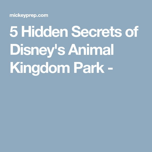 5 Hidden Secrets of Disney's Animal Kingdom Park -