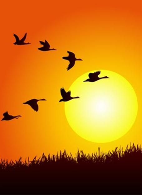 geese flying - Google Search