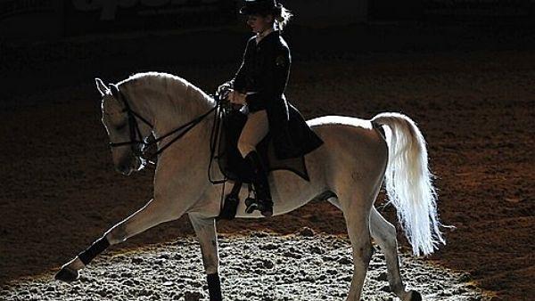 Lipicán - domovem Lipického koně je hřebčín Lipica. Leží několik kilometrů od přístavu Terst ve Slovinsku. Hřebčín i tito bílí koně získali název podle vísky Lipica. Hřebčín založil Karel Štýrský v roce 1580 s cílem zásobovat vhodnými koňmi arcivévodské stáje ve Štýrském Hradci a ve Vídni.