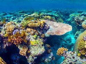 Büyük Bariyer Resifi'nin temizliğinde robotlar kullanılacak  http://www.sualtigazetesi.com/?p=80571