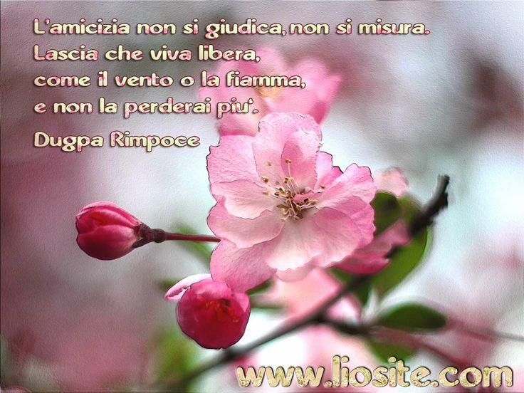 Dugpa Rimpoce - L'amicizia non si giudica.. ✾◕‿◕✾  #liosite, #frasibelle, #sensodellavita, #aforismi, #ItalianQuotes, #frasi, #perledisaggezza, #perledacondividere, #GraphTag, #ImmaginiParlanti, #citazionifotografiche, #dugpaRimpoce, #amicizia,