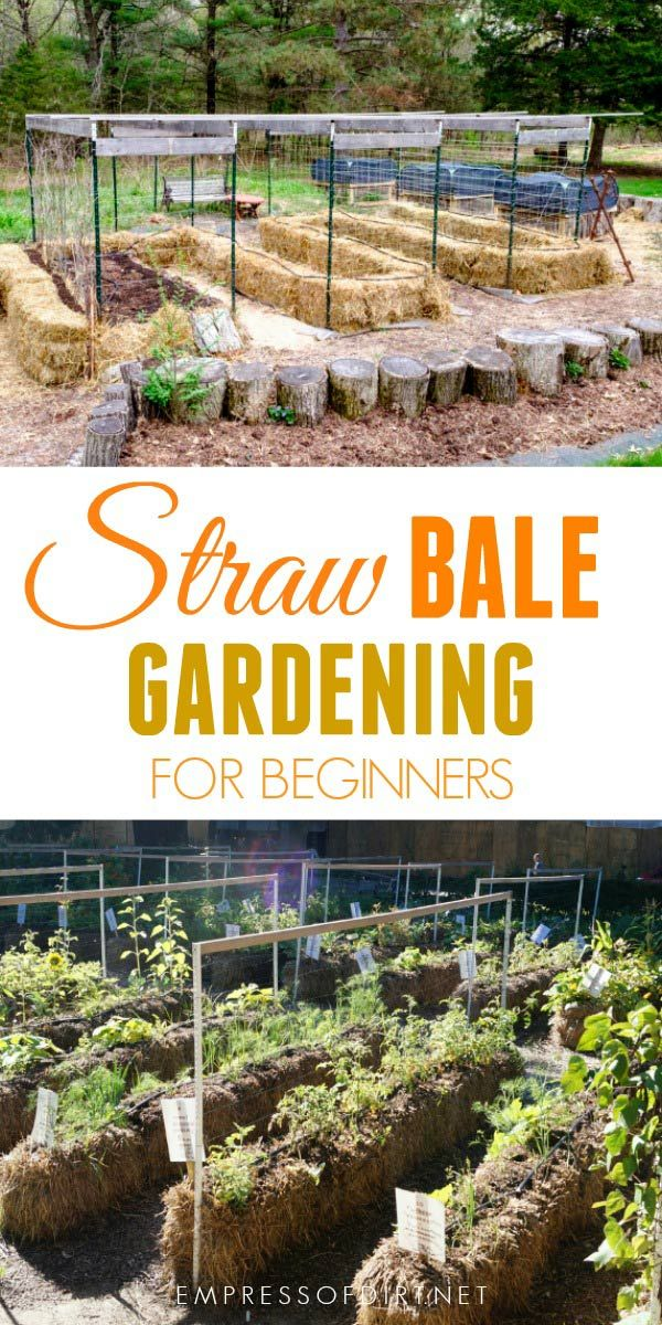 Want To Try Straw Bale Gardening Gardening For Beginners Straw