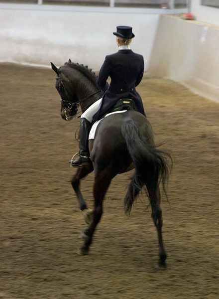 Horse and rider #dressage