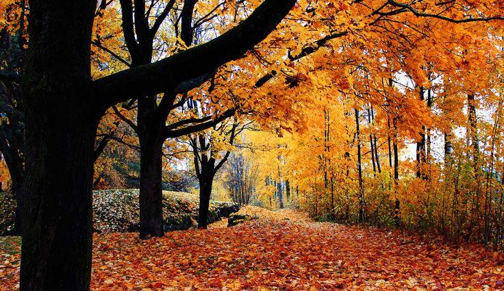 Perfect autumn Lappeenranta, Finland.