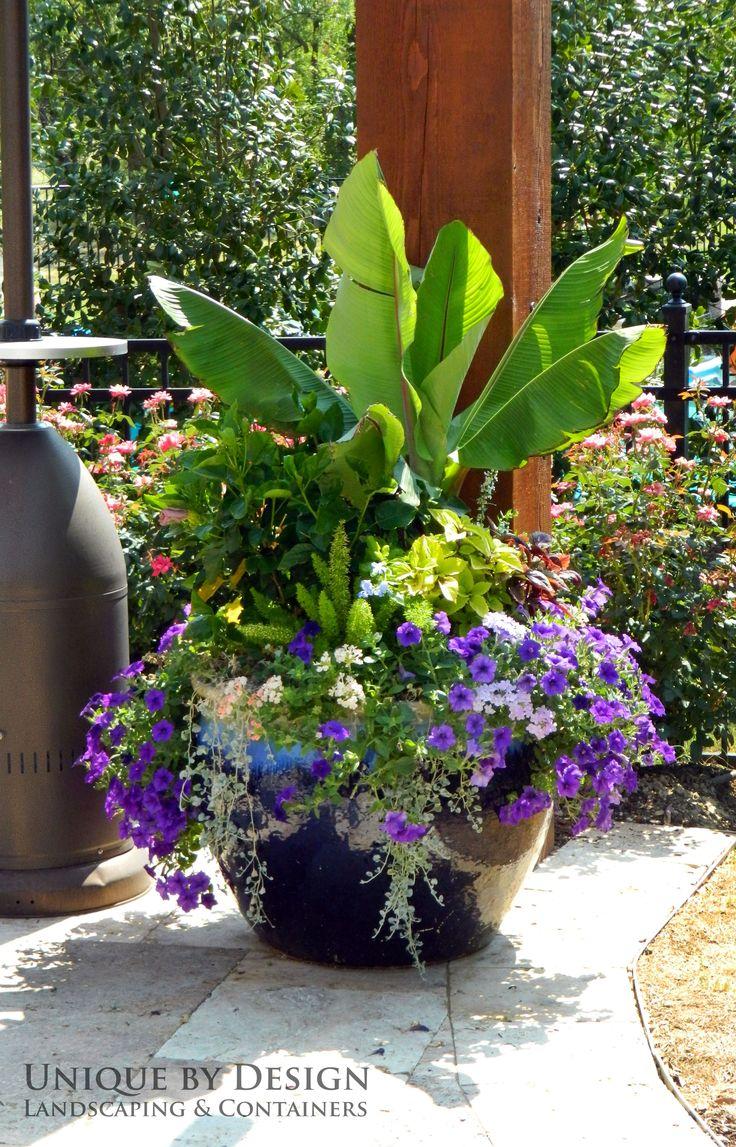 Banana tree dichondra silver falls petunia foxtail fern for Garden container designs