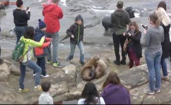 Leões-marinhos são tratados como objetos por turistas em busca de selfies