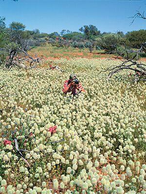 Learn more about #wildflower season in #WesternAustralia