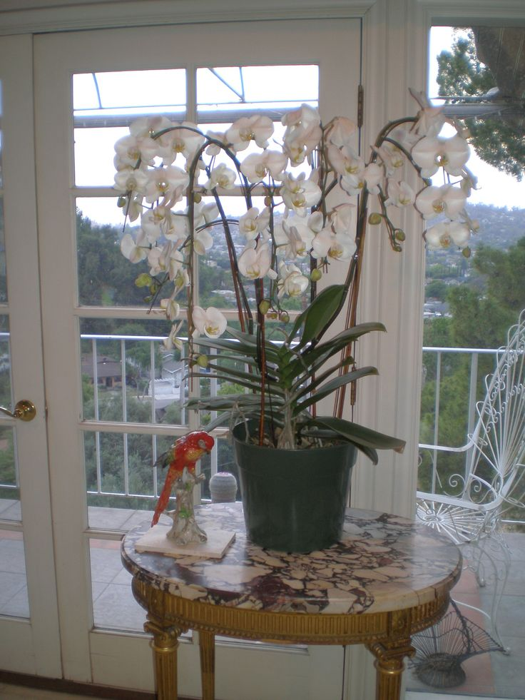 """Gift from my husband :single orchid plant 38""""wide X 39"""" high"""