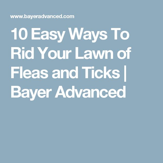 10 Easy Ways To Rid Your Lawn of Fleas and Ticks   Bayer Advanced