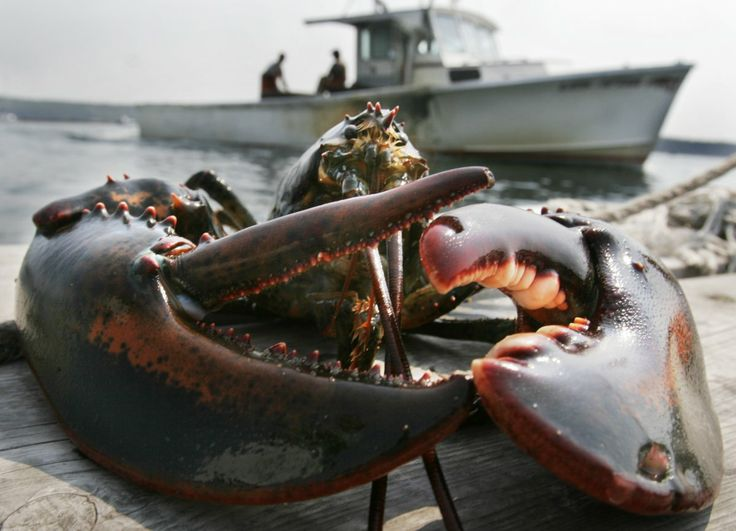 Can't wait for lobster season to start
