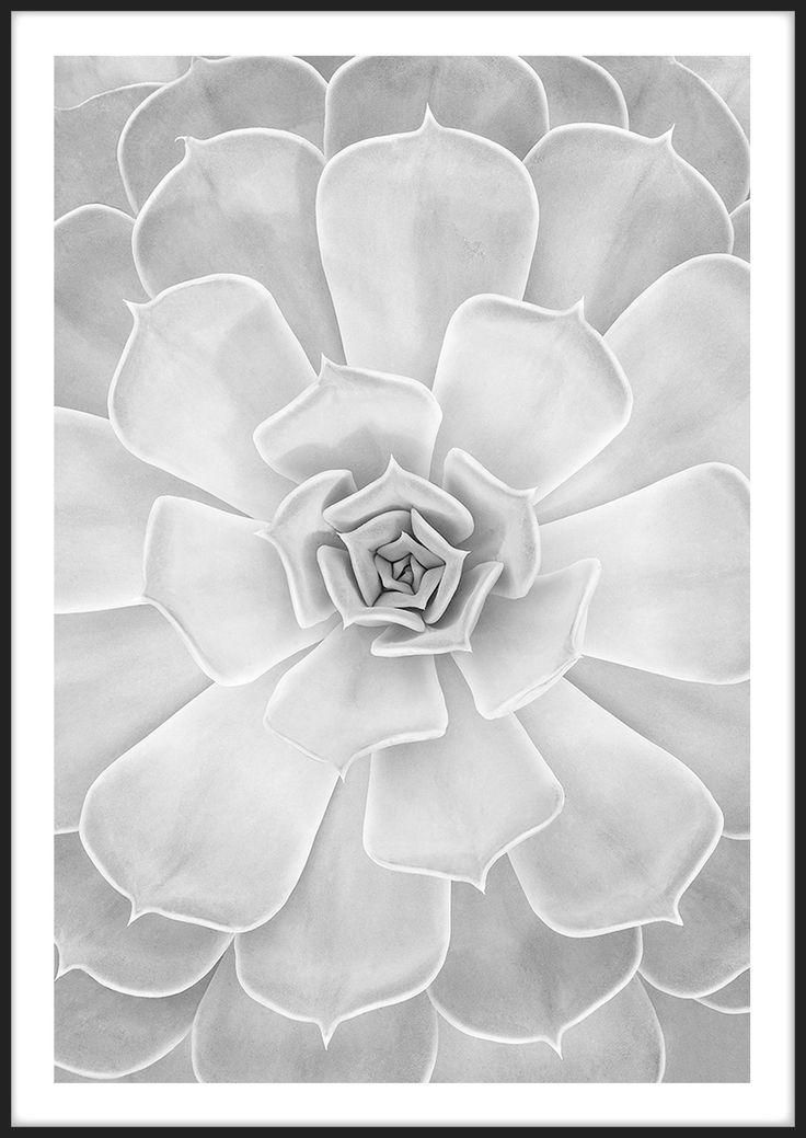 Light Succulent, från Insplendor tryckta med Giclée Fine Art Print-teknik
