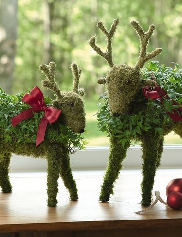 Mossed Ivy Reindeer Topiaries are pre-planted with English ivy. it can be a nice Xmas accessory item.