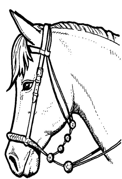 wild horse coloring pages bing images - Horse Color Page