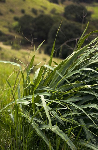 17 best images about edible plants northern california on for California fish planting