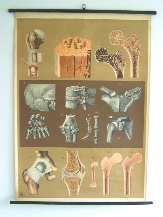 SALE 20% OFF - Human Joints - Human Bones - Human anatomy - Graduation Gift - Vintage Anatomy - Old Poster Art
