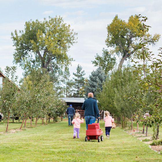 4 Ottawa Apple Orchards We Love   U-pick apple orchards we love in Ottawa