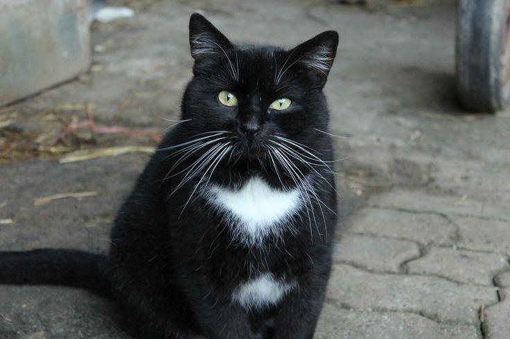 #Katze #Kater #schwarz #weiß #SchrägerBlick #süß #sweet