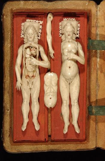 17th century ivory anatomical models