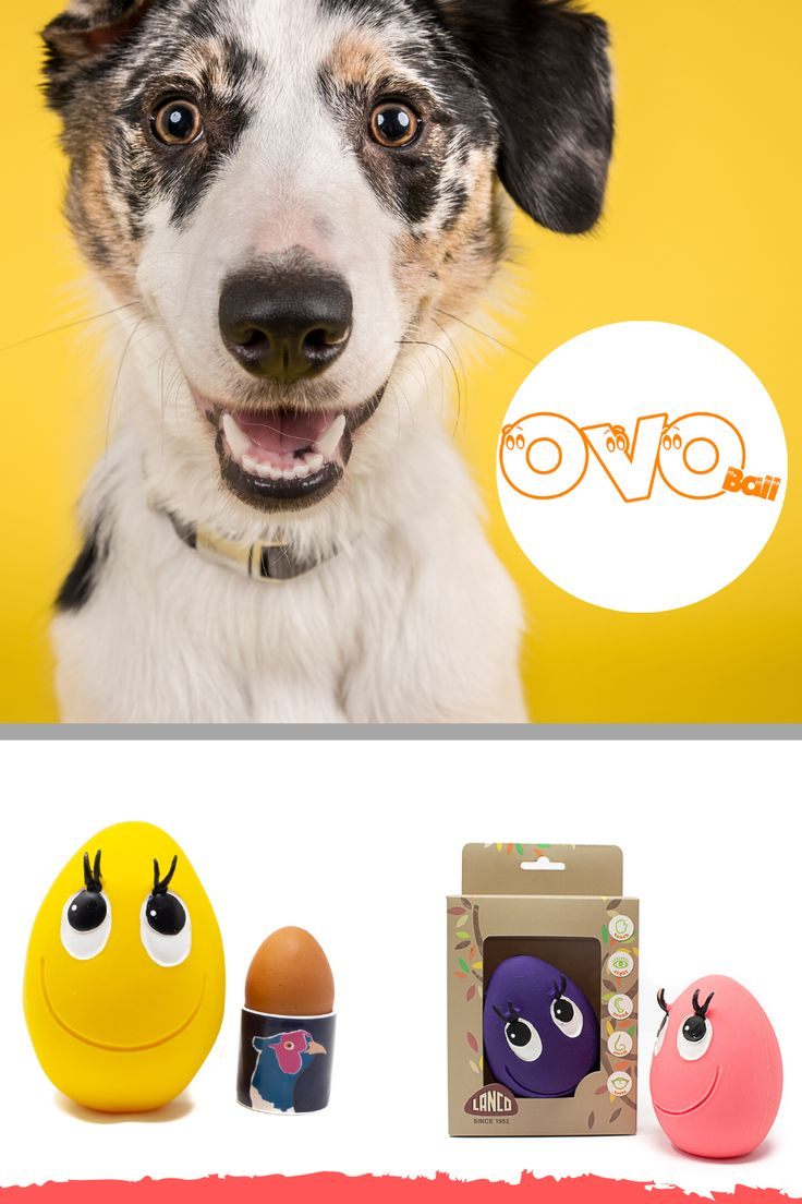 Ovo eggs The Toy Dogs LOVE in 2020 Puppy teething, Dog