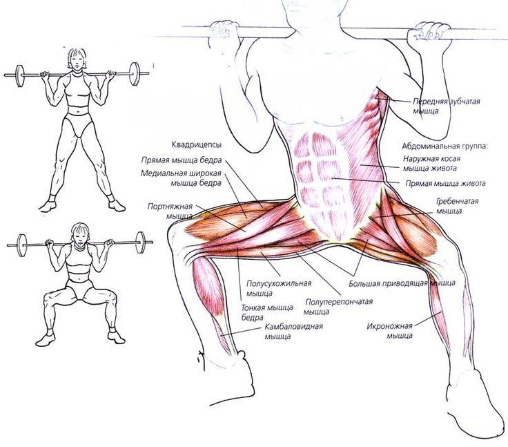 Картинки с надписью вот какие мышцы работают