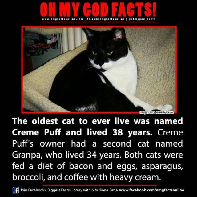 Oh my god facts. The oldest cat to ever live was named creme puff and lived 38 years. Creme puff's owner had a second cat named Granpa, who lived 34 years. Both cats were fed a diet of bacon and eggs, asparagus, broccoli, and coffee with heavy cream.