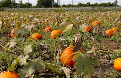 Pit Stop at the Pumpkin Patch John Abbott College, Sainte-Anne-de-Bellevue, QC September 2015