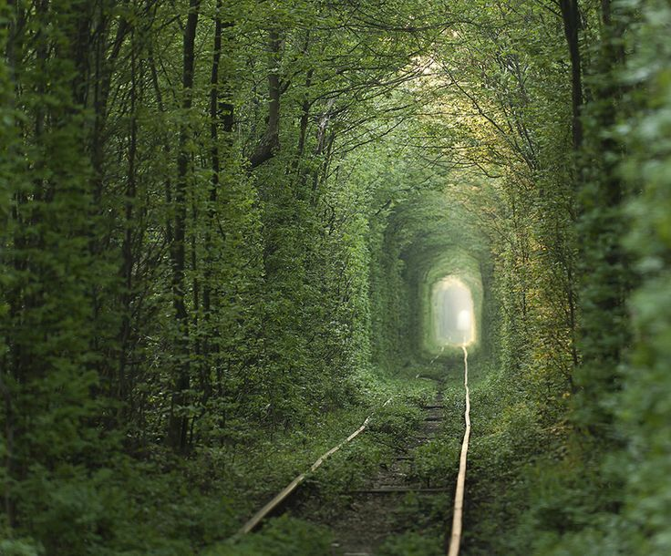"Tunnel Of Love. Giant trees surround this old train tunnel located in Kleven, Ukraine. The magical-looking place is nicknamed ""The Tunnel Of Love"" by locals because it is a popular spot for couples to visit."