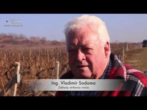 Strihanie viniča - YouTube