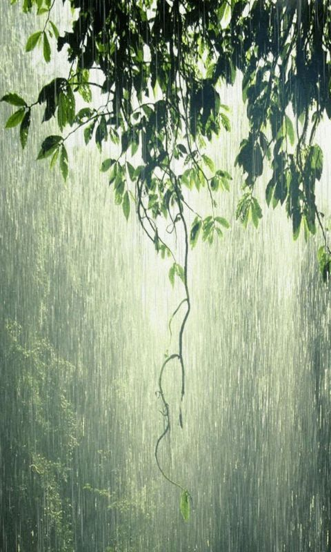 Raindrops 3d Live Wallpaper Download Animated 480x800 171 Rain Forest 187 Cell Phone
