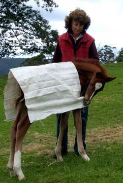 trauma-less foal training and weaning… LOVE this idea!