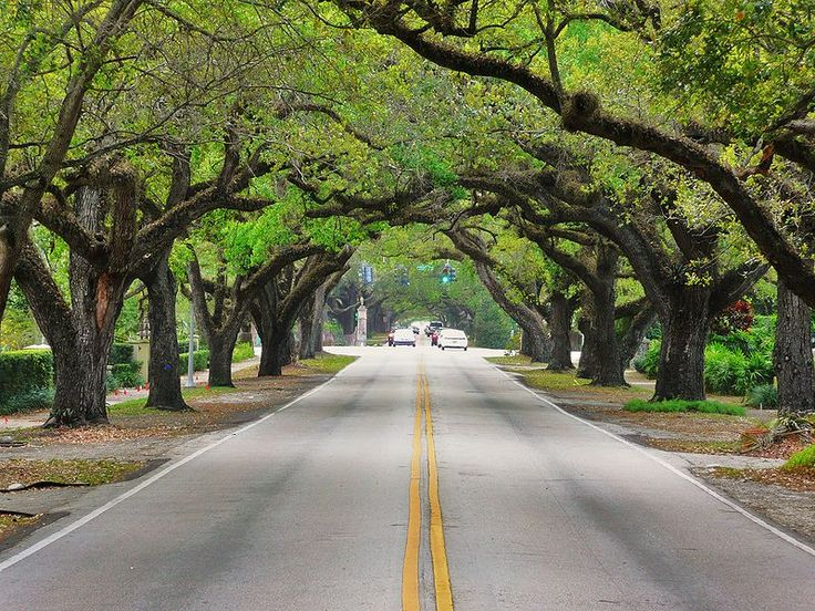 Coral Way, one of the many scenic roads through the Gables (Coral Gables, Florida)