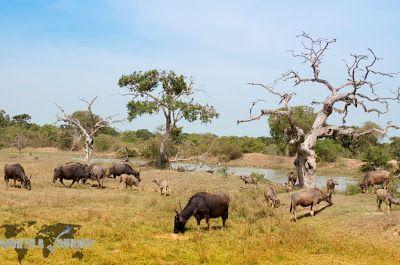Yala National Park | Natural Creations
