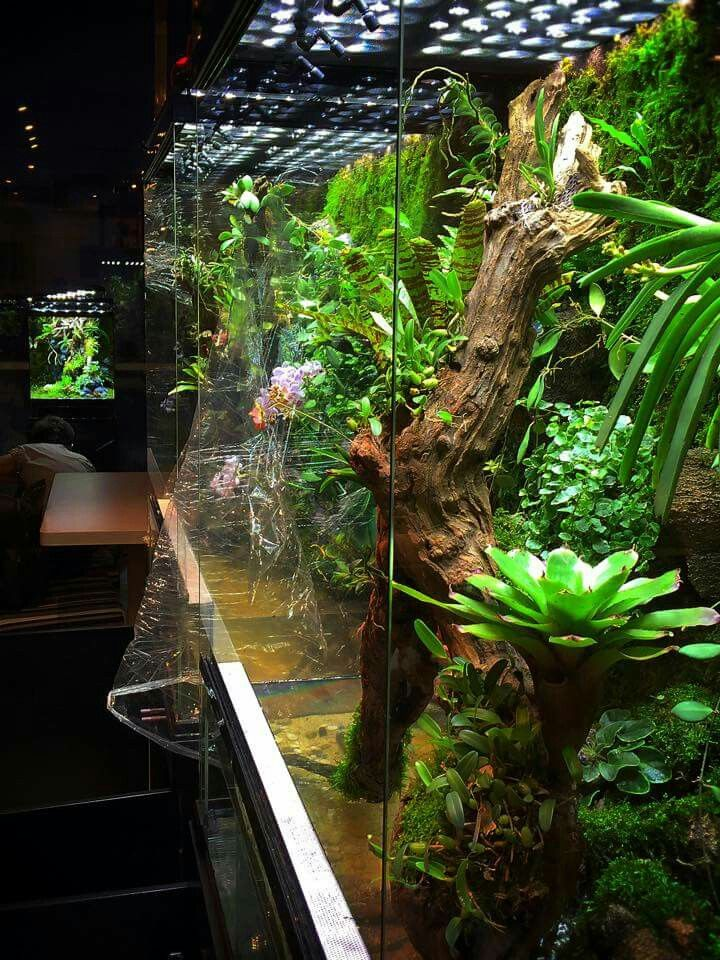 Reptile Cage, Freshwater Aquarium, Vivarium, Tropical Terrariums, Dart  Frogs, Exotic Pets, Hermit Crabs, Aquascaping, Zoos - 77 Best Awesome Reptile Exhibits Images On Pinterest Terrarium