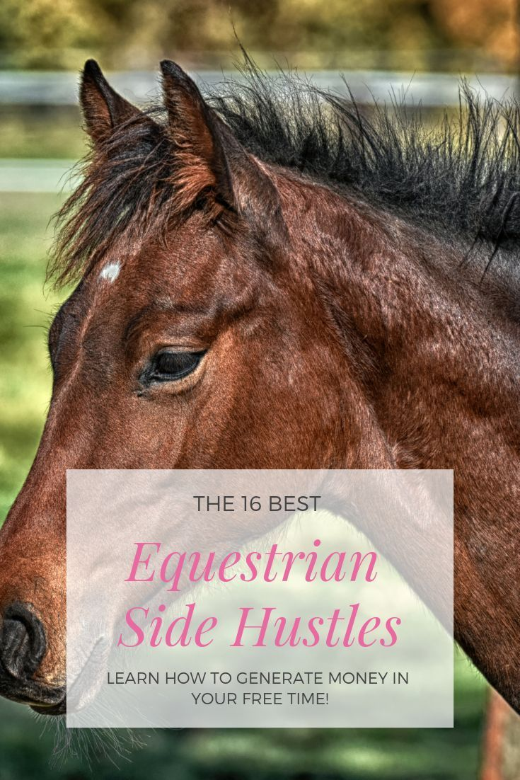 Use A Side Hustle To Earn Extra Cash For You Or Your Horse Horses Equestrian Equestrian Outfits [ 1102 x 735 Pixel ]