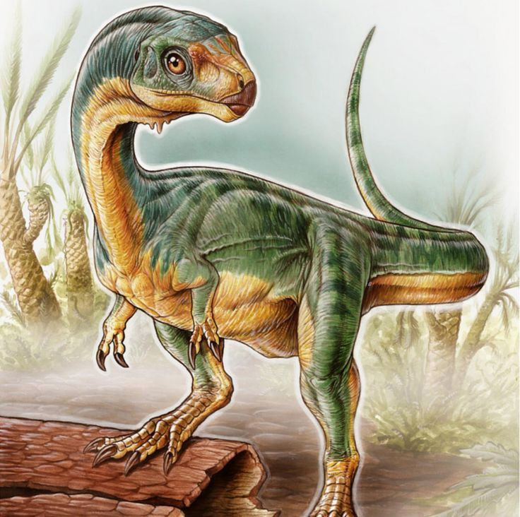 Bizarre 'platypus' dinosaur: Vegetarian relative of T. rex. Paleontologists have described the Chilesaurus as a 'platypus' dinosaur because its characteristics resembled different dinosaur groups. A proportionally small skull, Hands with two fingers like Tyrannosaurus rex, But feet more like primitive long-neck dinosaurs.