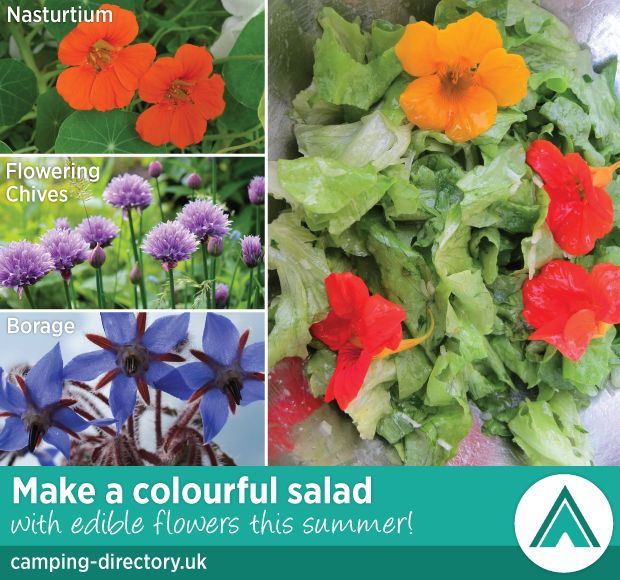 Make a colourful #salad with #edibleflowers this #Summer! :-)