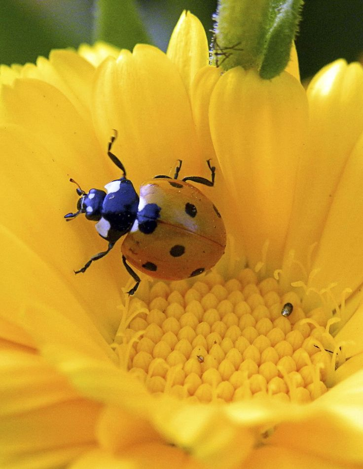 lady bugs bees flowers - photo #18