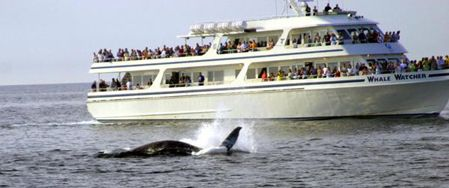 Things to do on Cape Cod Ma Attractions Whale Watching Cape Cod Railroad