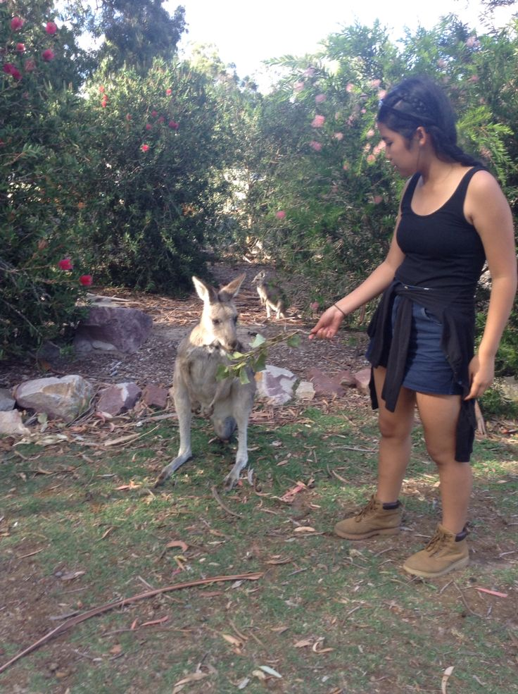 First time standing next to a kangaroo and feeding it food