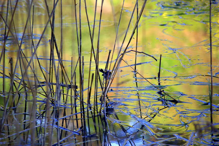 Ode to the River-reeds, water, blue wren