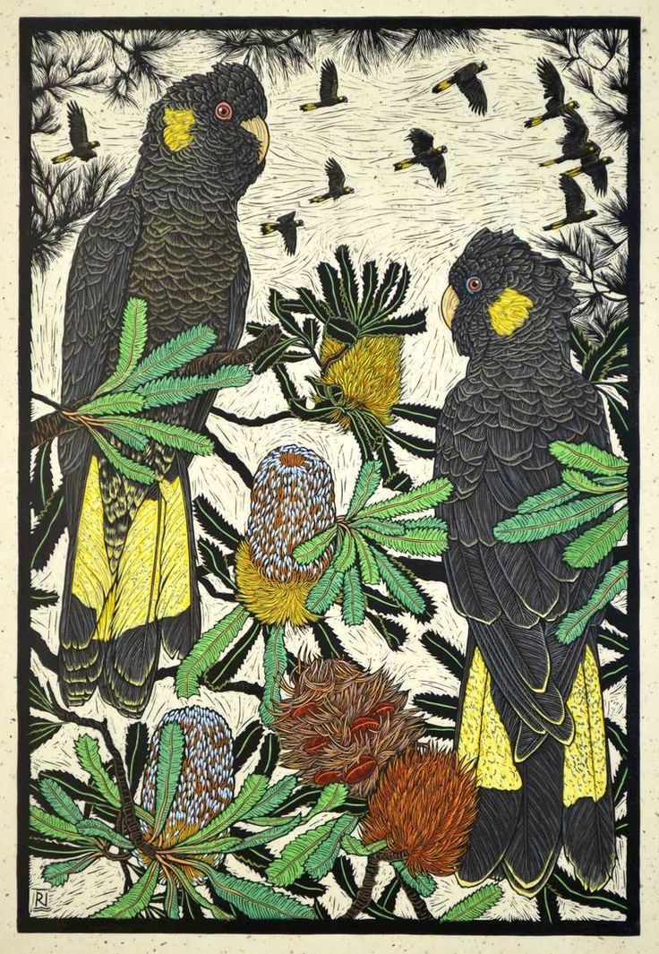 Yellow-tailed black Cockatoo & Banksia 75.5 x 50.5 cm Edition of 50 Hand coloured linocut on handmade Japanese paper $1,400