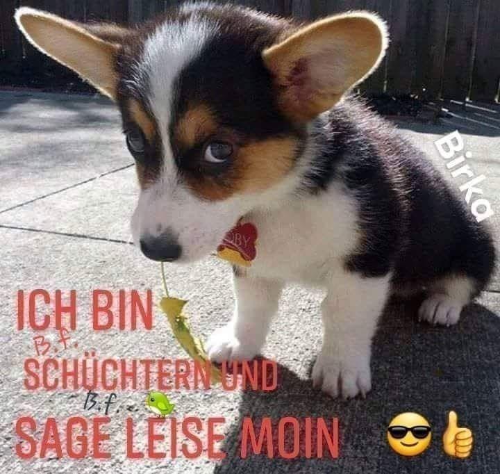 Pin Von Herta Winnisch Auf Guten Morgen Spruche In 2020 Guten Morgen Lustig Guten Morgen Gruss Lustige Guten Morgen Bilder