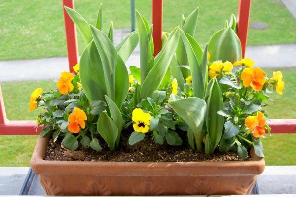 Pflegeleichte Balkonpflanzen - Den Balkon leicht und schnell verschönern - http://freshideen.com/dekoration/pflegeleichte-balkonpflanzen.html