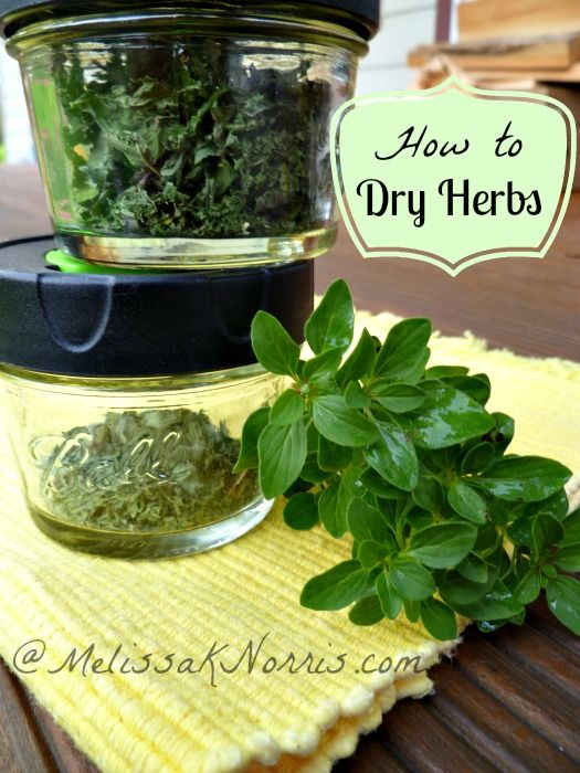 Dry your own herbs at home, with or without a dehydrator, plus storage tips. Can't wait to put up more mint. Read this now to get your herbs harvested before winter arrives and never pay grocery store prices again.