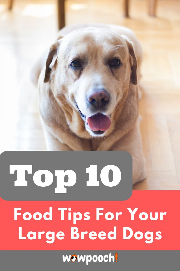 Best dog food for large breeds puppies adults dry