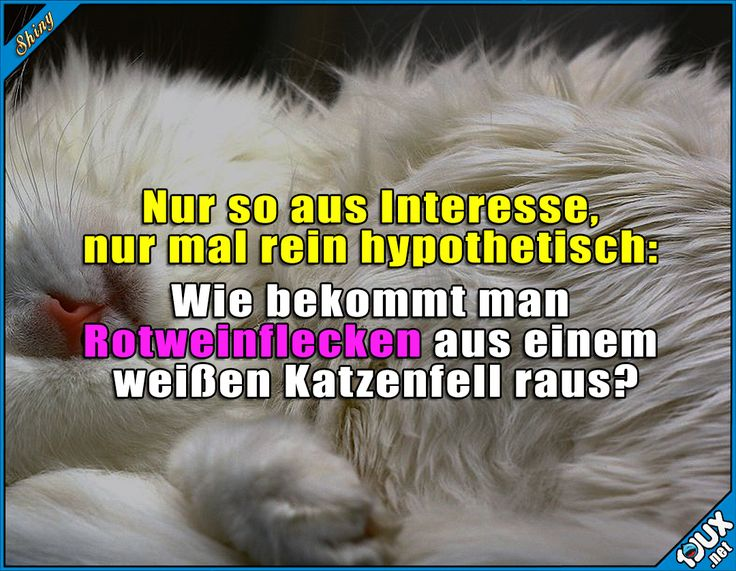 *versteckt Katze hinter Rücken* #Katze #Katzen #Katzenliebe #nurSpaß #Humor #lustige #Sprüche #Statusbilder